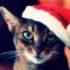 Кот в новогодней шапке: антирейтинг новогодних котов