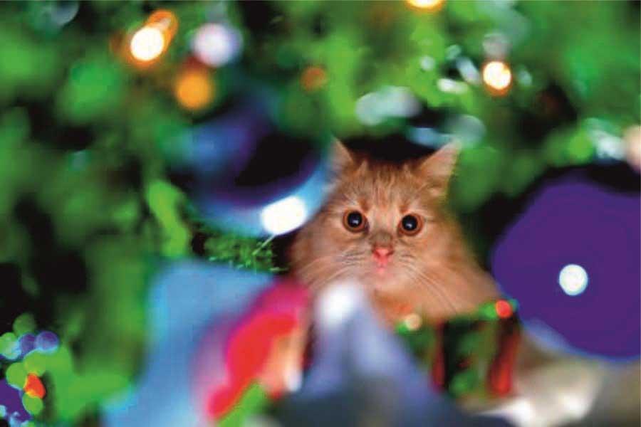 Новогодние приключения кота