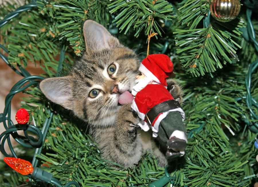 Новогодние проблемы кошек