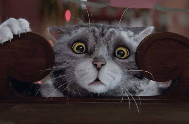 Ох уж эта кошка: новогодняя история от Sainsbury's, видео