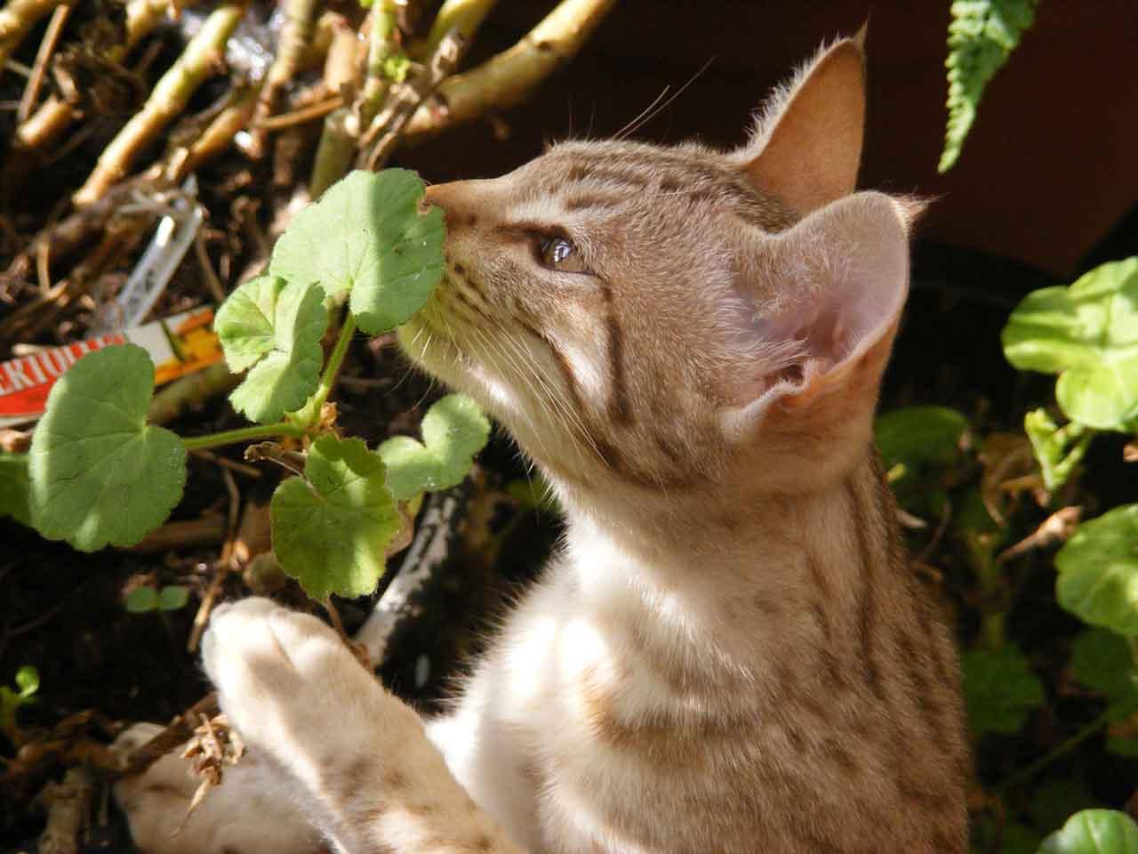 котенок и взрослая кошка как знакомить