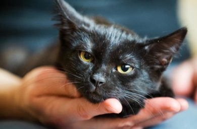 Опасен ли лишай у кошек для человека