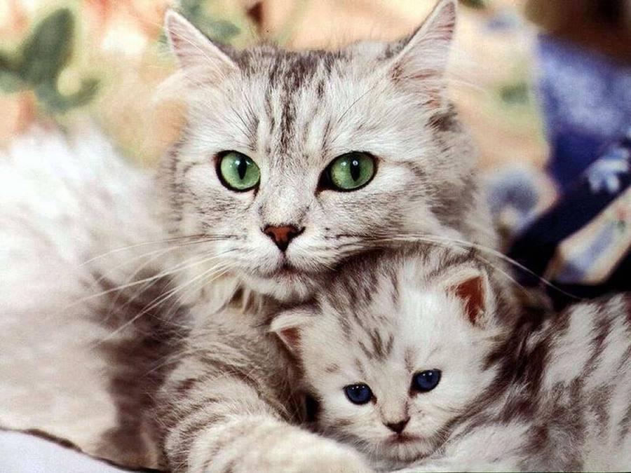 От чего зависит характер кошки