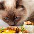 Отказ кошки от еды: 7 частых причин