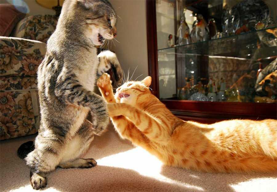 Что делать если меня бьет кот