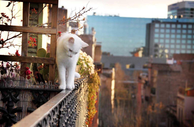 Почему кошка боится высоты?