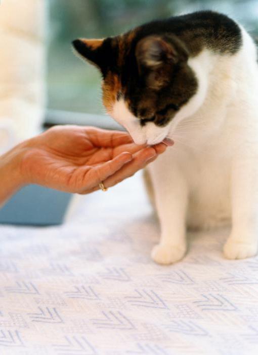 Почему кошка чихает и кашляет