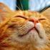 Почему кошка чихает, и у неё сопли?