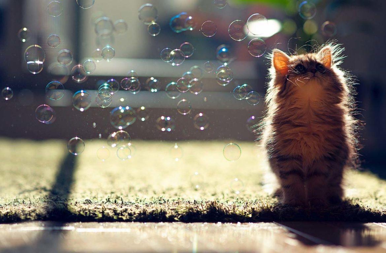 Почему кошка лижет мыло?