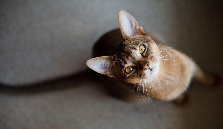 Худой кот, или почему кошка не поправляется