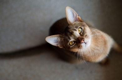 Почему кошка худая