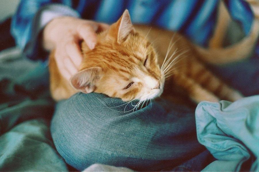 Картинки по запросу Почему кошка ложится на больное место человека?