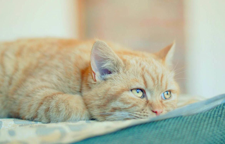 Если кот худой и плохо ест…