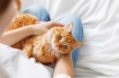 Почему кошка мнет лапами человека
