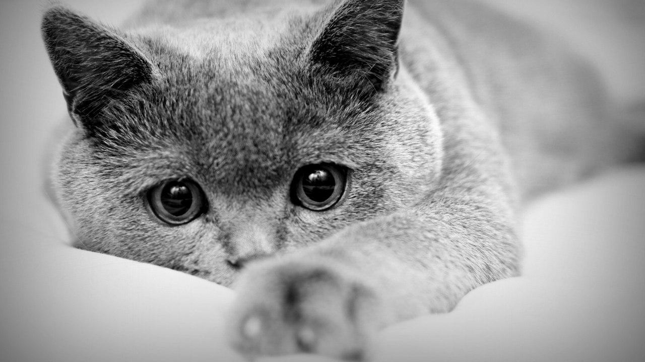 Почему кошка после стерилизации просит кота