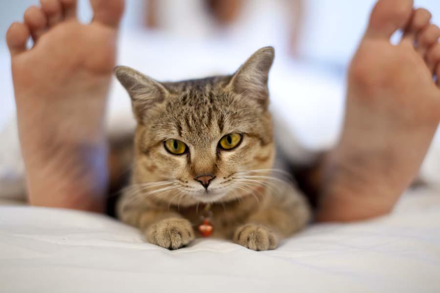 Почему кошка прячется под одеялом