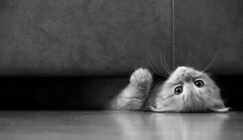 Кот плохо ест прячется