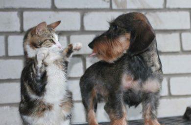 Почему кошка с собакой не дружат
