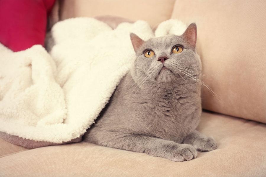 Почему кошка уходит от котят