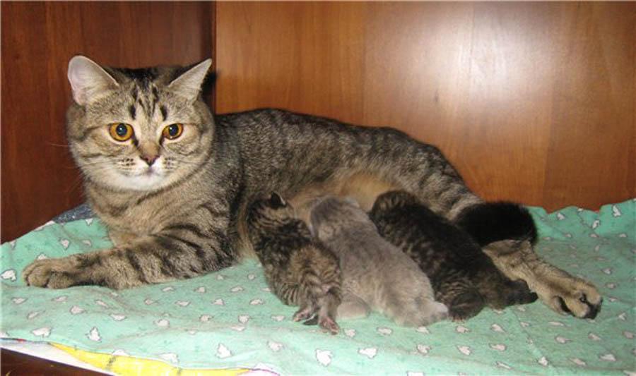 Почему кошка уходит от новорожденных котят