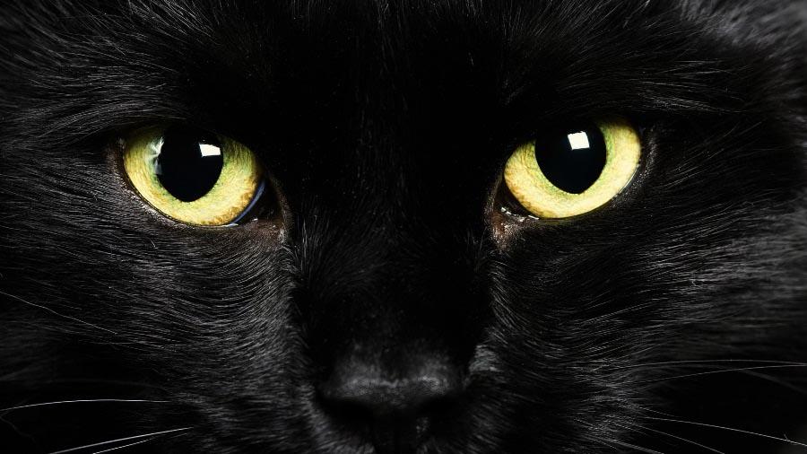 Почему кошка видит ночью