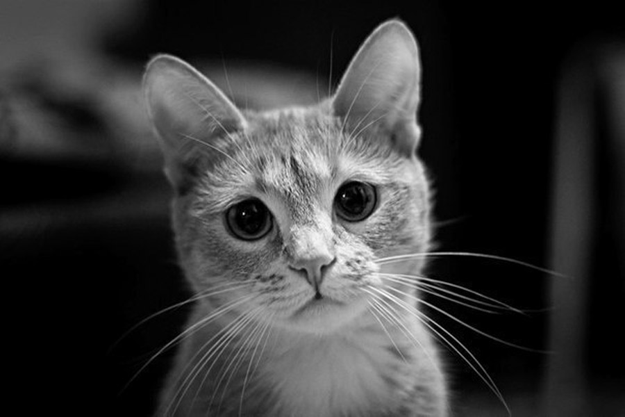 Почему кошка все время чихает