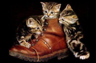Почему кошкам нравится запах пота