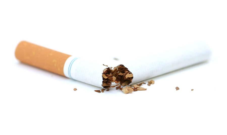 Почему кошкам нравится запах табака