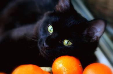 Почему кошки любят запах цитрусовых