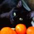 Почему некоторые кошки любят запах цитрусовых?