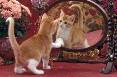 Почему кошки не видят себя в зеркале