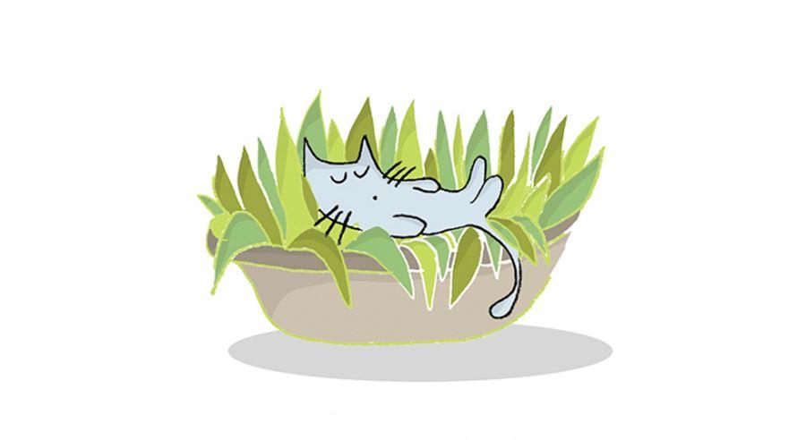 Почему кошки независимые