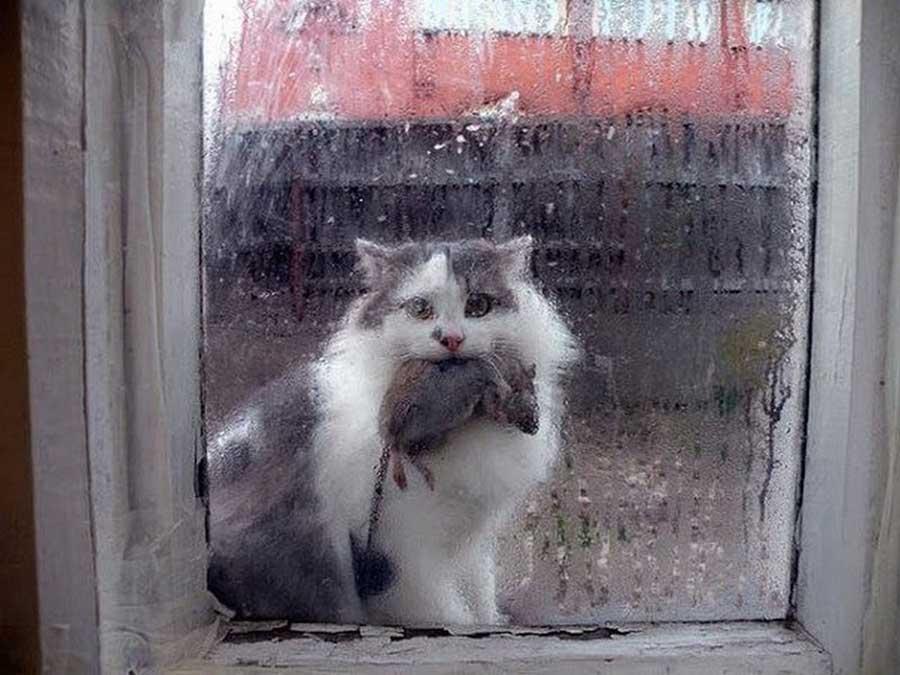 Почему кошки приносят нам мышей