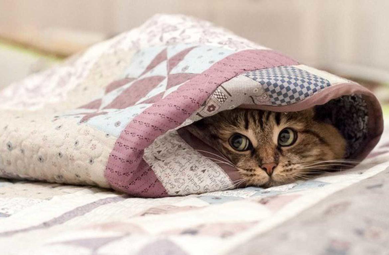 Почему кошки прячутся под одеялом?