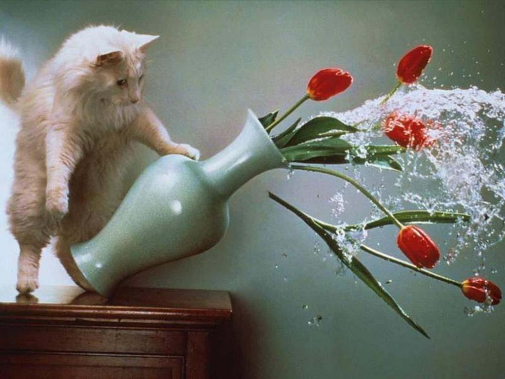 Почему кошки сбрасывают предметы