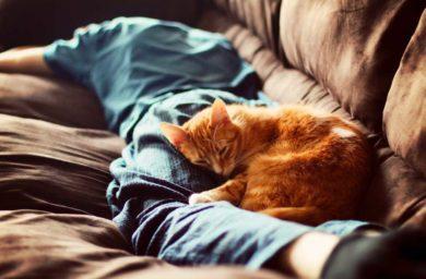 Почему кошки спят на человеке