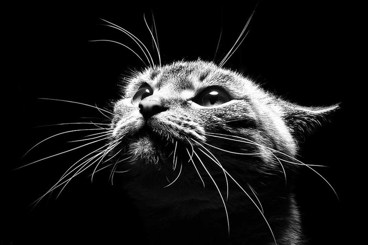 Почему кошки видят ночью