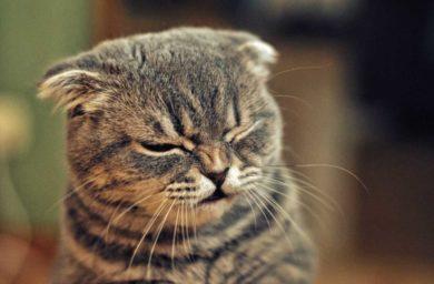 Почему кот чихает и чем его лечить