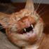 Почему кошка все время чихает?