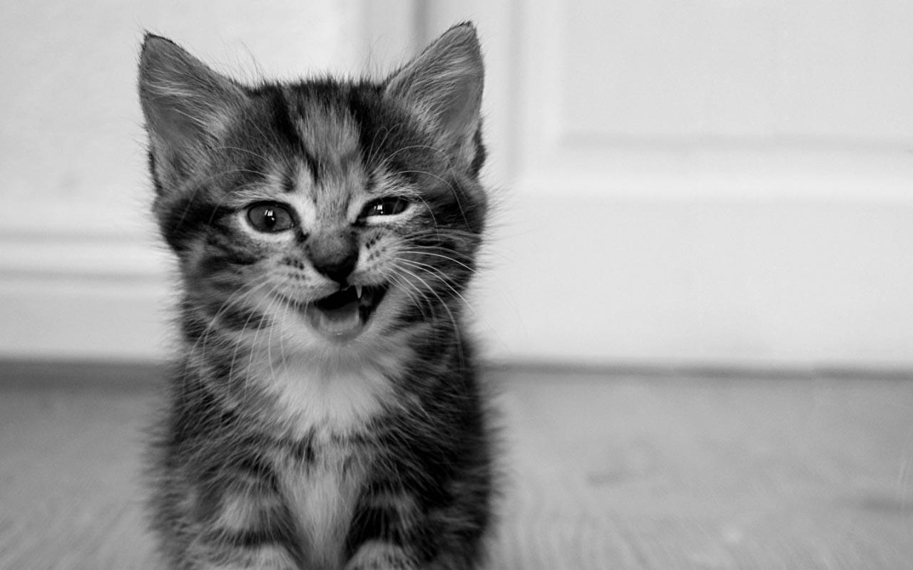 Кот чихает когда ест