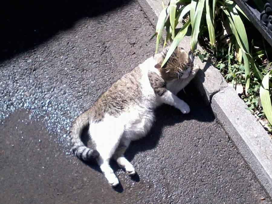 Кот худой не может ходить