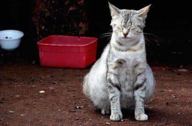 Почему кот худой, а живот большой