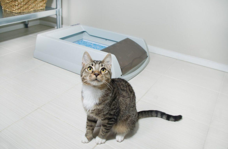 Сколько раз должен писать кот кастрированный