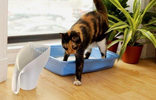 Почему кот перестал ходить в лоток
