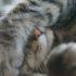 Почему коты метят людей?