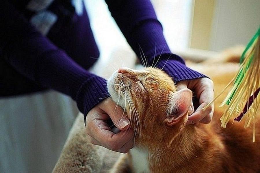Почему люди заводят кошек