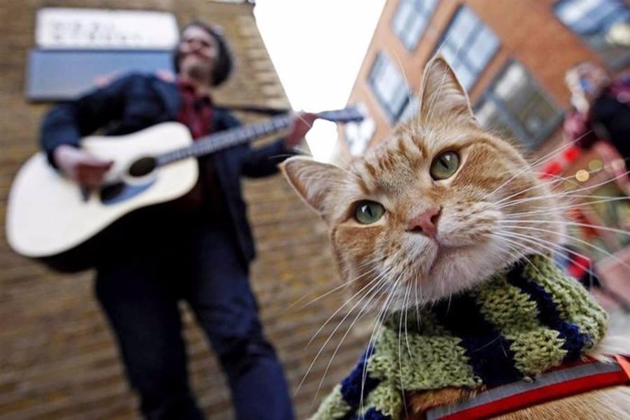 Визг кошки mp3 скачать