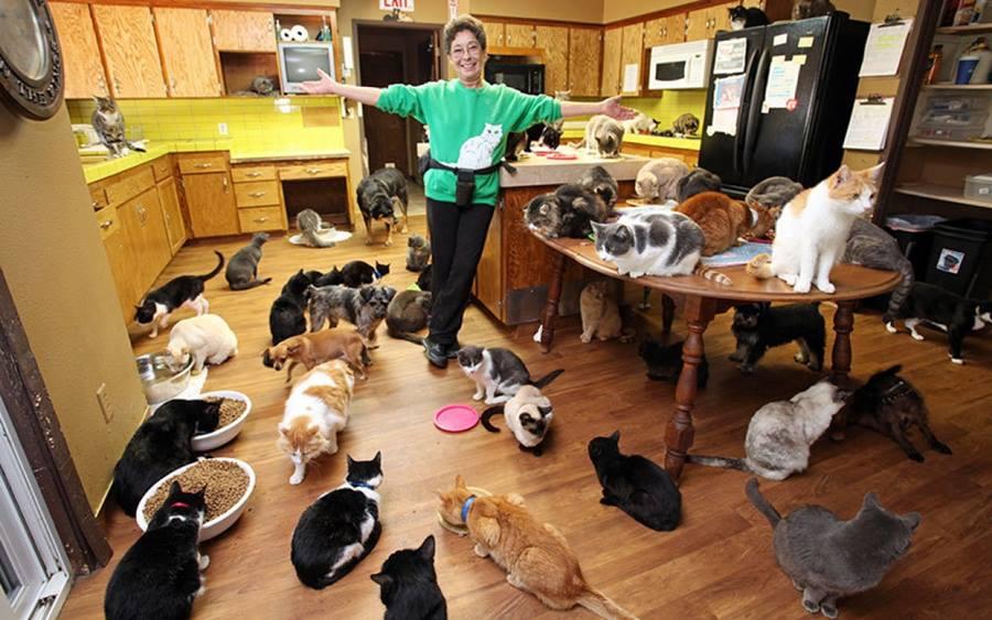 Почему люди заводят много кошек