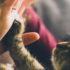 Почему люди заводят кошек?