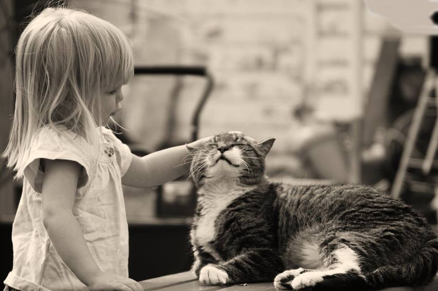 Почему людям нравятся кошки
